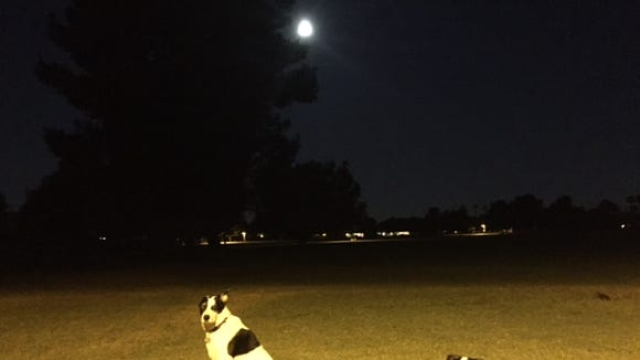 Supermoon, dogs, morning ... hope