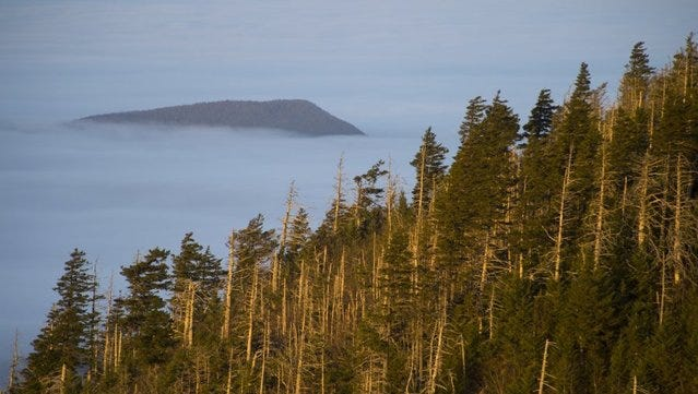 A mountain blanketed in clouds appears to float like an island above a treeline on Mt. LeConte in the Great Smoky Mountains National Park on Nov. 13, 2014.