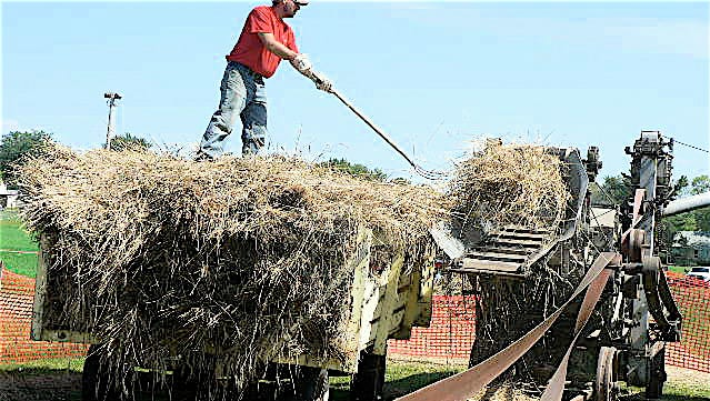 Dan Zimmerman pitches bundles into the thresher.