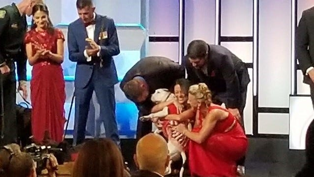 Abigail, the one-eared pit bull, wins the 2017 American-Humane Hero Dog Award on Sept. 16, 2017, at The Beverly Hilton.