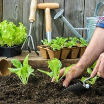 Home and garden events July 22 and beyond