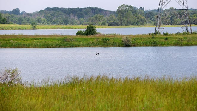A blue heron flies over the water at Crandell Lake near M-50 and Stewart Road.