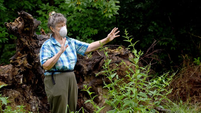 Sutu Forte, chairwoman of It's Our Wild Nature, stands near a toppled tree as she talks about the opening of the new city trail she fought by camping in a tree for eight days in 2019. The city took the corridor through eminent domain and Forte still awaits an outcome of a misdemeanor trespassing charge for her protest.