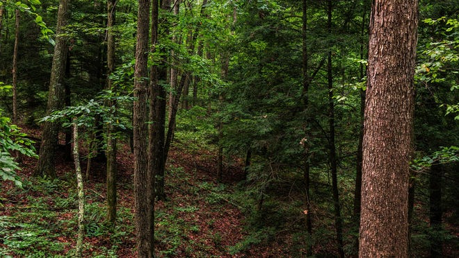 The Arc of Appalachia, a nonprofit grassroots organization that acquires and stewards wildlands in  southeastern Ohio, is fundraising to save a 108-acre plot of land adjacent to Hocking Hills State Park. The land was originally slated to harvest timber, but fundraisers hope it will soon become a nature preserve.