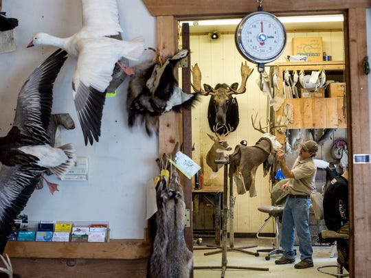 Paul Burczycki works on mounting a deer as dozens of other animals line the wall Saturday, March 5, 2016 at St. Clair Flats Taxidermy in Algonac.