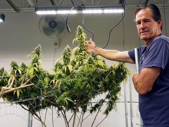 Maine marijuana grower Tom Albert shows off his plants