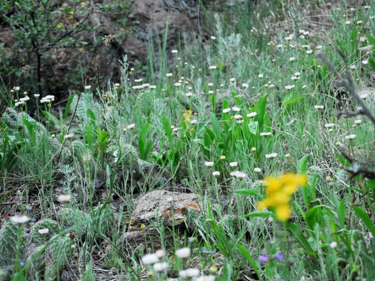 wildflowers.horsetooth