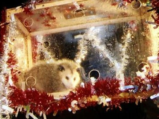 Earlier this year, Wake County Superior Court Judge Allen Baddour ruled in favor of a PETA legal challenge to the possum drop. The judge found the license the N.C. Wildlife Resources Commission issued last year to allow the use of a live, wild opossum was improperly issued.