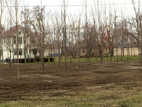 The sugar maple trees from Hantz Farms on Wednesday near Mack and McClellan in Detroit.