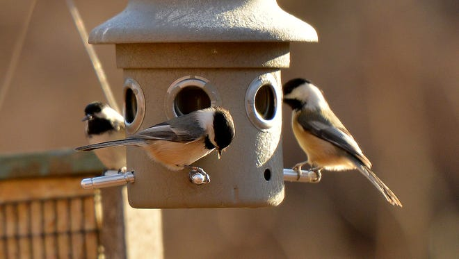 The Bergen County Audubon Society will begin its Great Backyard Bird Count at 9:30 a.m. Sunday at the Teaneck Creek Conservancy.