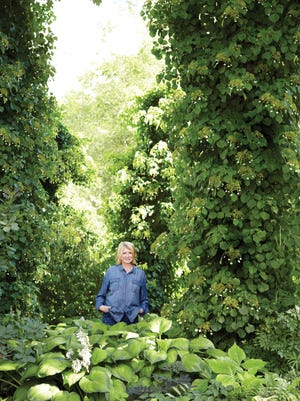 """Martha Stewart stands at the entrance to her property, where there is a large garden shaded by towering spruces, old maples and several 20-foot tall """"stumps"""" of hurricane-damaged spruces. Each trunk is covered in a dense green vine known as climbing hydrangeas (Hydrangea anomala subsp. petiolaris)."""