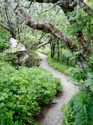 The Craggy Gardens Trail is a popular stop along the Blue Ridge Parkway. A woman was sexually assaulted not far from the trail in May.