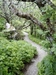 The Craggy Gardens Trail on the Blue Ridge Parkway Friday. A woman was sexually assaulted not far from the trail in May 2016.