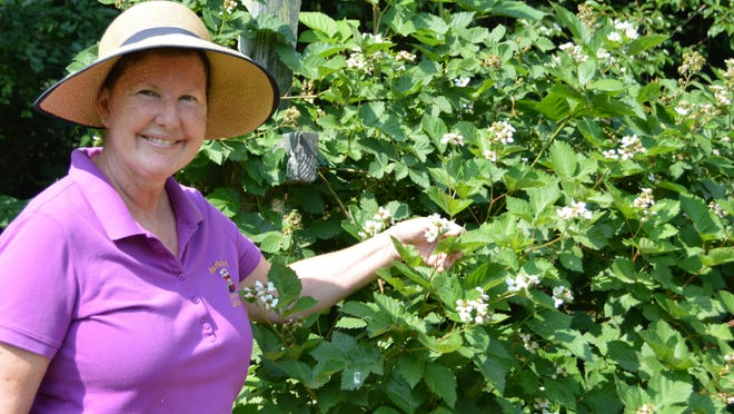 Krista Scudlark proudly holds up a blackberry bloom from her garden.
