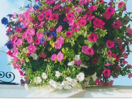 635942429411367107-Merrill-Hanging-Flower-Baskets-2016.jpg
