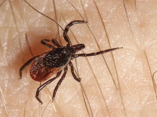 If you're going to be out in the woods, walk in the center of trails and use a tick repellent on skin and clothing.