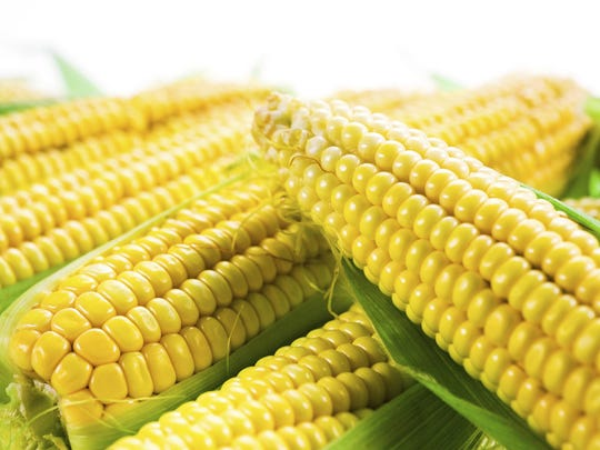 Take sweet corn straight home after purchasing and put it into the refrigerator. You can even take a cooler with you to the market. Keep it cold and it will reward you with tenderness and superb flavor.