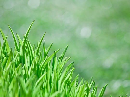 Stock photo: Fresh grass