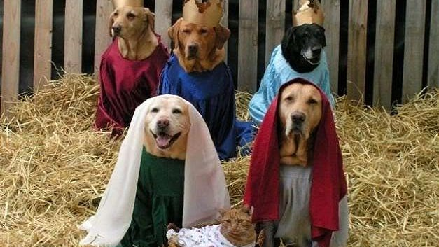 """""""And this shall be a sign unto you: Ye shall find the babe wrapped in swaddling clothes and lying in a manger."""""""
