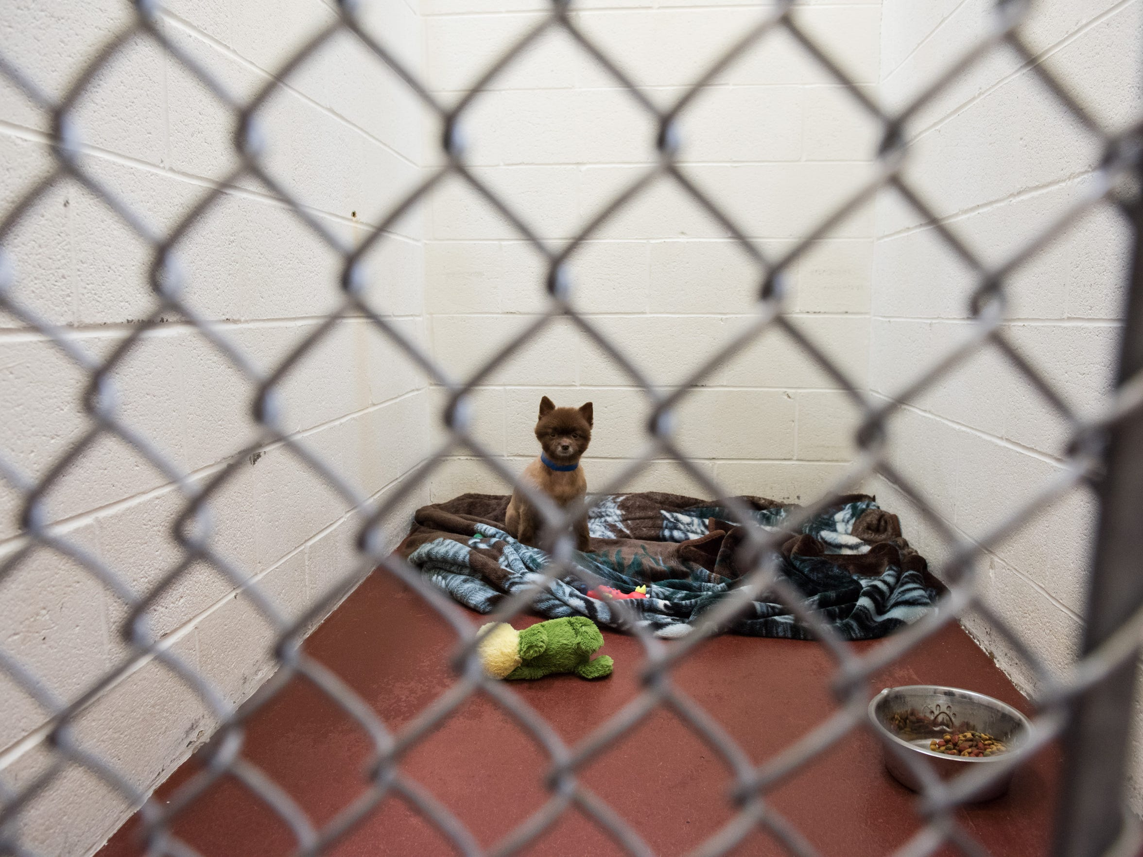 A dog seized in Eden sits alone in its kennel at the Humane Society of Wicomico County on Wednesday, April 27, 2016.