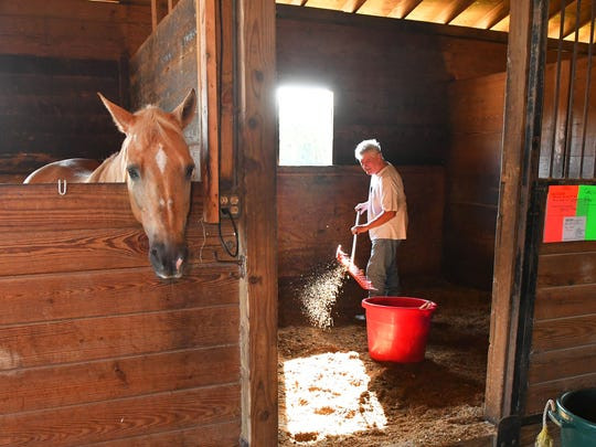 Volunteer Arthur Berger cleans the stalls, which were spared the flood waters. However, at least two of the horses stomped snakes to death who had invaded their stalls. Harmony Farms, Inc., a non-profit, volunteer based equine service that provides horse riding therapy for disabled individuals, has about 10 inches of water from the St. Johns River flooding most of it's land area. Efforts are boning made, and they need financial assistance.