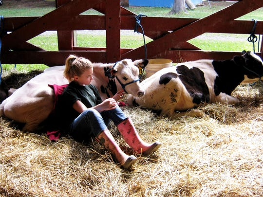 Rachel Cartner relaxes with her dairy cows at the 2013