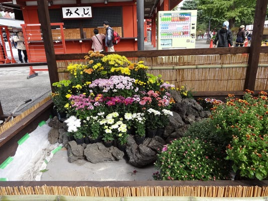 You Wont Believe The Most Popular Flowers In Japan