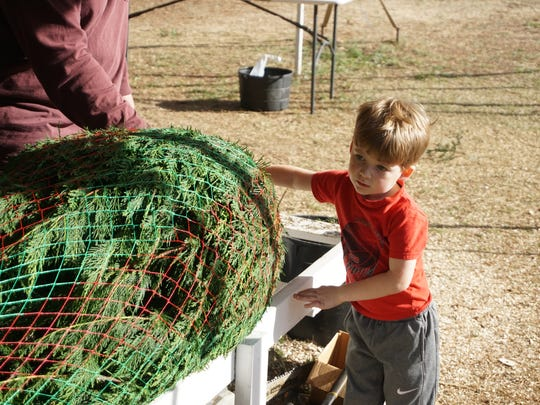 Sawyer Griffith lends a hand while Anthony Simonds wraps a Christmas tree cut by Griffith and his father Shawn.