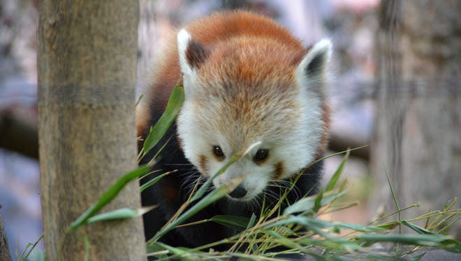 Ingham County residents will receive free admission to Potter Park Zoo on Saturday, Oct. 7, 2017 from 9 a.m to 5 p.m.