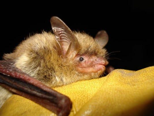 Bats-Regulat_Clar.jpg