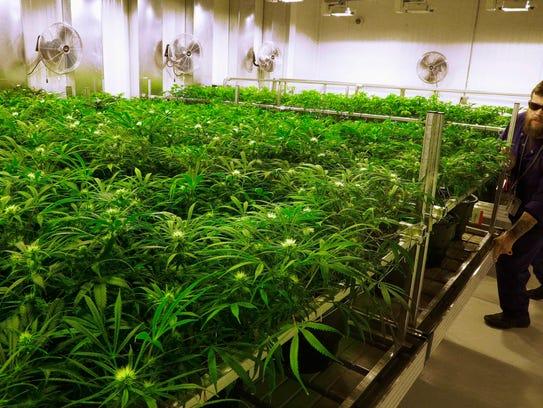 Nation set to approve legal pot sales