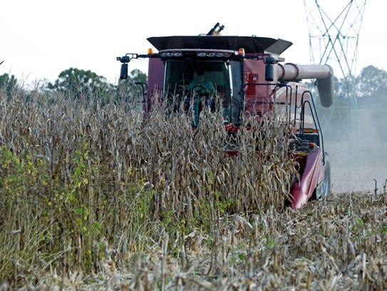 Eddie Sanders works in a cornfield Monday, Sept. 25,