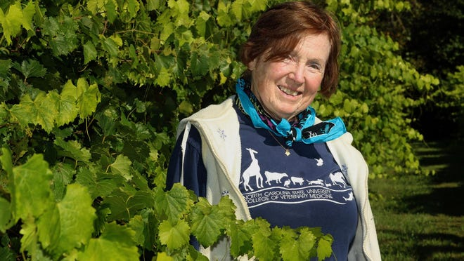 Owner Debra Blanton poses with the grape vines Saturday morning, Oct. 3, 2020, at Triple BBB Vineyard on West Zion Church Road near Shelby.