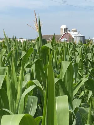 Wisconsin field crops continue to lag behind the normal growing schedule thanks to a wet, cold spring.