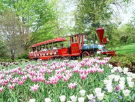 Spring Flower Festivals & Viewing Spots