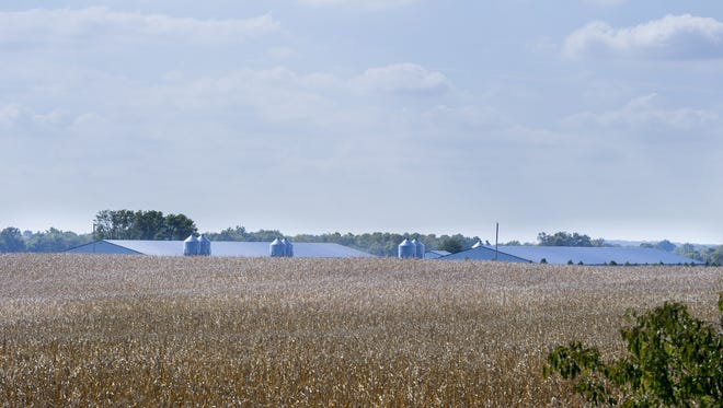 Richard Himsel's view of the neighboring hog operation can been seen from the second floor of his home, over the top of the crop of corn. Himsel, 74, has lived on or near the farm his family has had since 1940 in Danville, Ind. Himsel has filed a lawsuit challenging the constitutionality of Indiana's Right to Farm laws. He says the presence of the industrial-sized hog farm adjacent to his property, 1,600 yards from his home, has diminished the quality of his life. Due to the odor, his wife no longer lives on the property.