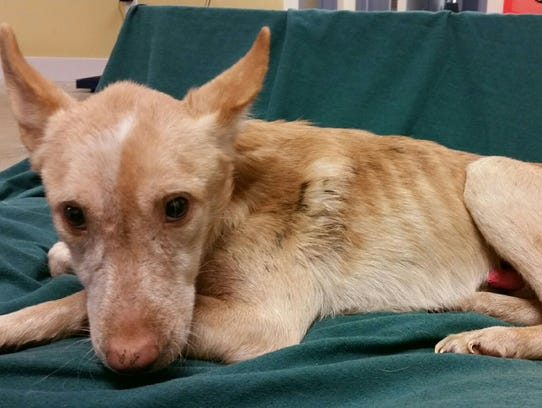 One of the 14 dogs rescued from a Millsboro home on