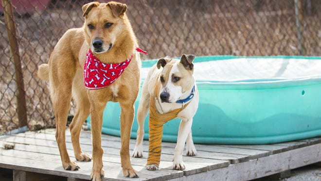 Maggie (left) stands with Quarry (right) in the exercise yard behind Faithful Friends' animal shelter in March.