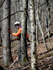 Chris Ulrey, a plant ecologist with the Blue Ridge Parkway and a member of the Arborist Incident Response Team, assesses a tree during a vista clearing project on the Blue Ridge Parkway April 13, 2018.
