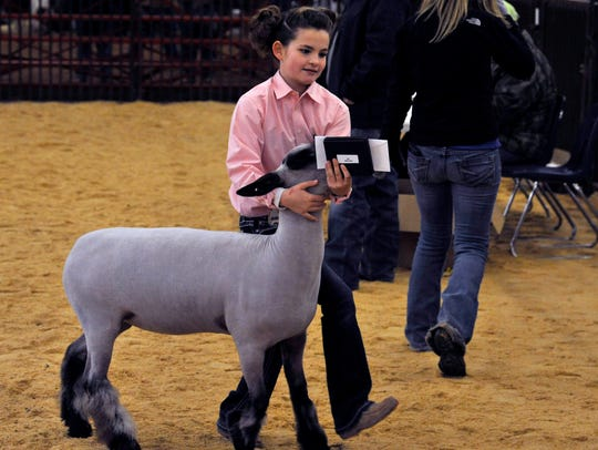 Cyndee Hanslik earned Overall Grand Champion in the lamb show during Thursday's Taylor County Livestock Show. Cyndee also took junior showmanship.