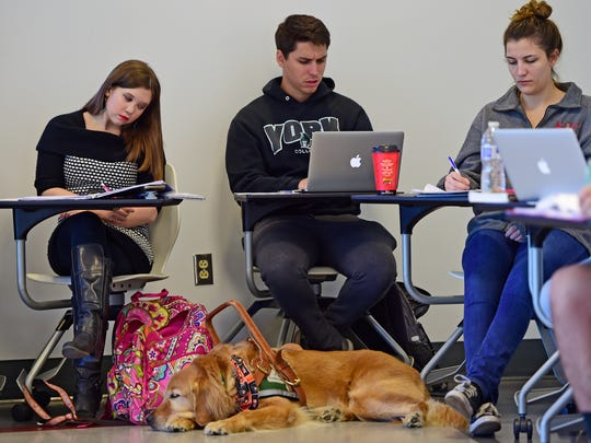 Blair Hagelgans sits in her Leadership and Change class with her service dog Creed. Hagelgans, a York College senior, has Chiari malformation and syringomyelia. She has problems with balance and coordination, and has 17 brain and spine surgeries.
