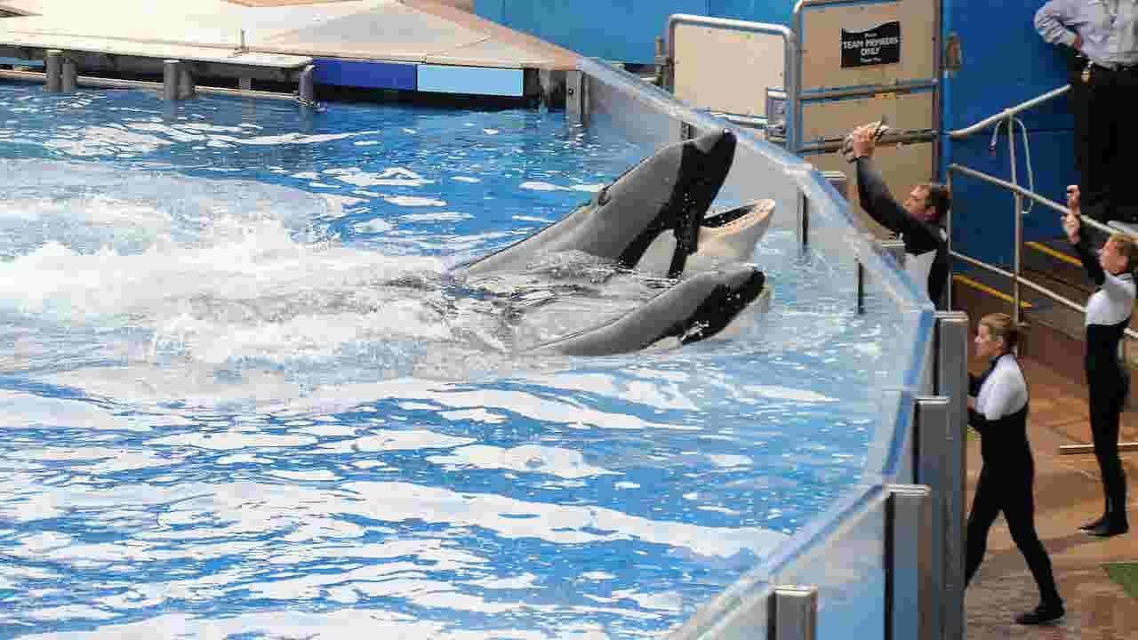 SeaWorld orca whale Tilikum dies