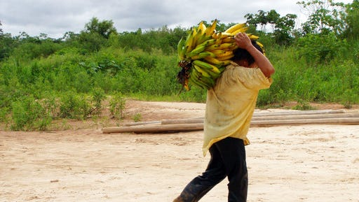 A Tsimane man carried bananas, among a group of indigenous people with a traditional lifestyle deep in the Bolivian Amazon, and according to a new study released Friday March 17, 2017, they have some of the healthiest hearts on the planet, according to Dr. Randall Thompson, a cardiologist at St. Luke's Health System in Kansas City, Missouri, USA.  Scientists say the new findings underline the significance of lowering the traditional risk factors for heart disease, and like the Tsimane people, we should be physically active and have a low fat, low sugar diet.