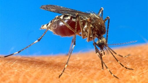 The Mississippi State Department of Health is confirming one new human case of chikungunya (chih-kihn-GUHN'-yuh) virus.
