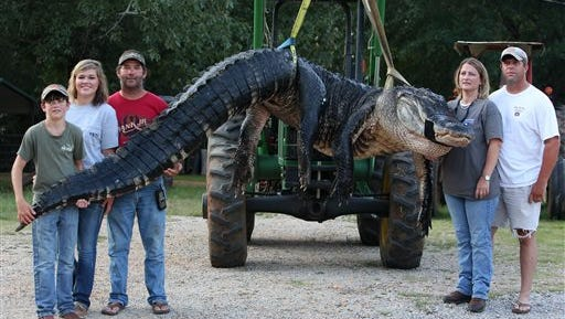 A monster alligator weighing 1011.5 pounds measuring 15-feet long is pictured in Thomaston, Ala. The alligator was caught in the Alabama River near Camden, Ala., by Mandy Stokes at right, along with her husband John Stokes, at her right, and her brother-in-law Kevin Jenkins, left, and his two teenage children, Savannah Jenkins, 16, and Parker Jenkins, 14, all of Thomaston, Ala.