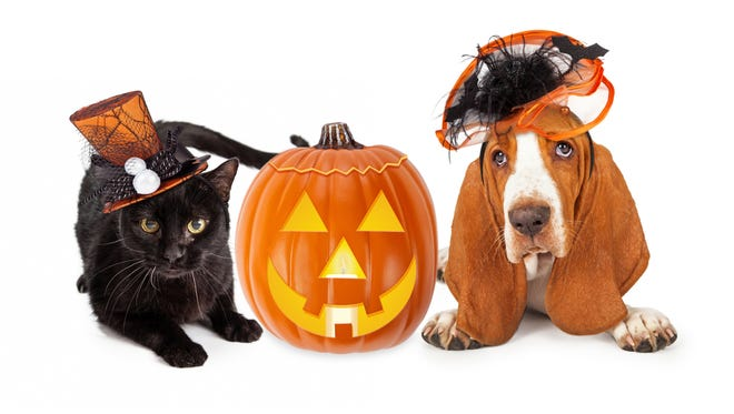 Dress up your critter and vie for prizes while benefiting Beesley Animal Human Foundation.