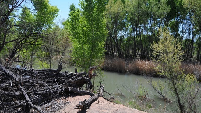 """Tavasci Marsh in Cottonwood empties into the Verde River. The area has been named an """"important birding area"""" by the Audubon Society."""