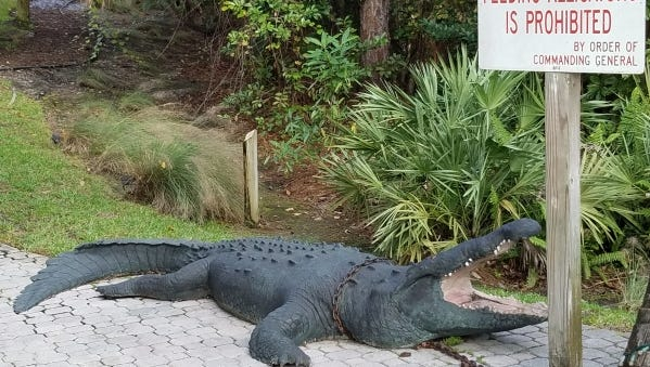 Charlie's Neighborhood Bar & Grill's mascot, Mo the Gator, out by outdoor covered dining called The Swamp.