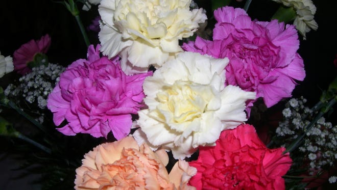 Carnations come in many colors.