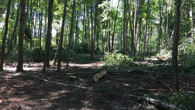This photo, posted on a city of Battle Creek social media account, shows a site at the Metcalf Lake property where trees were cut.